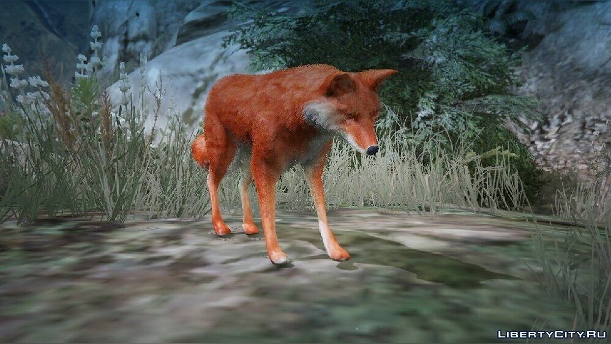 New character Wild fox for GTA 5